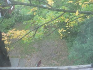 sault house backyard before